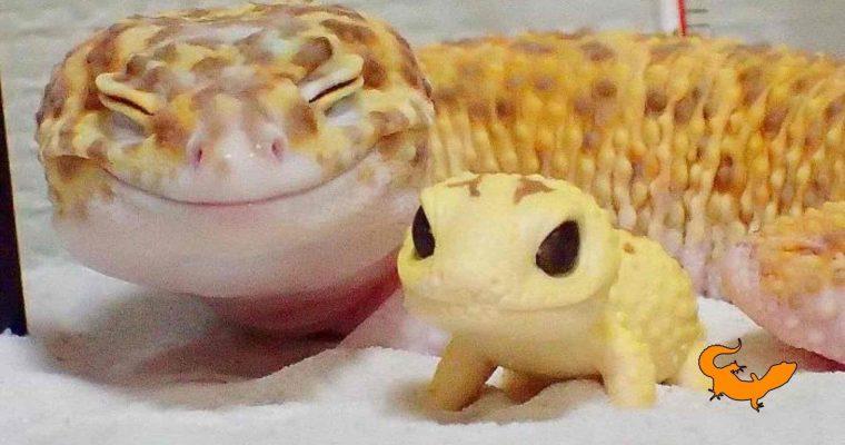 Il sorriso del geco leopardino