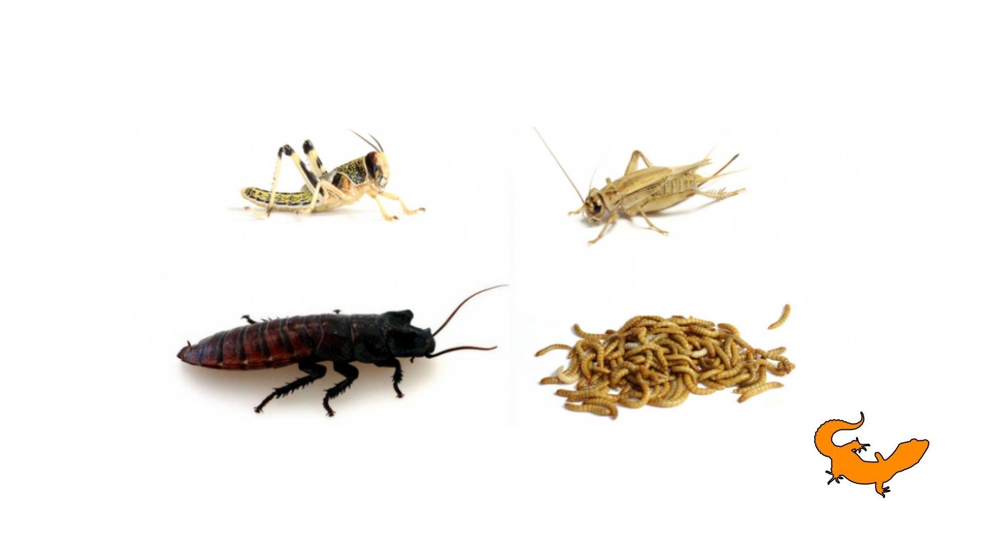 Mantenere in vita gli insetti da pasto